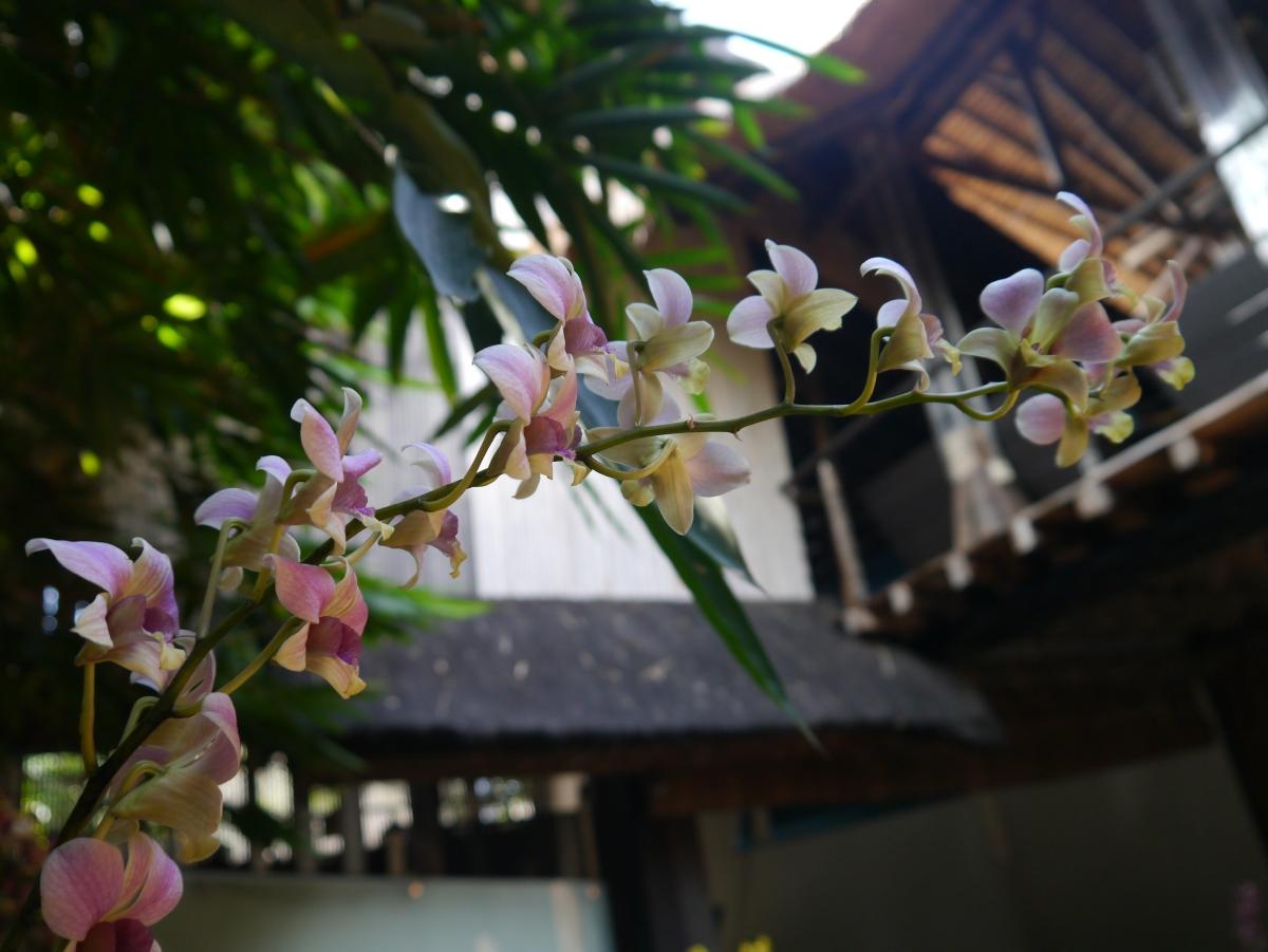 Clear Café, Ubud, Bali Indonesia