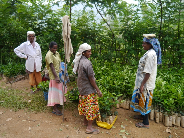 Tea workers preparing saplings for planting