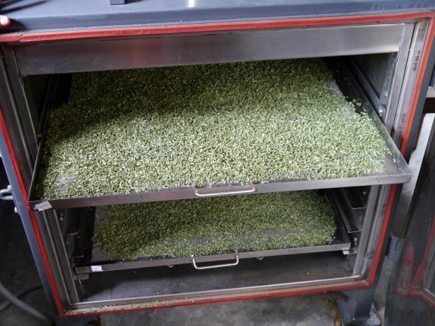 Lemongrass drying