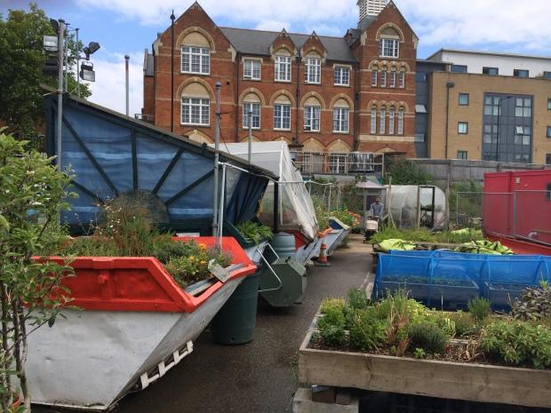 The garden growing...