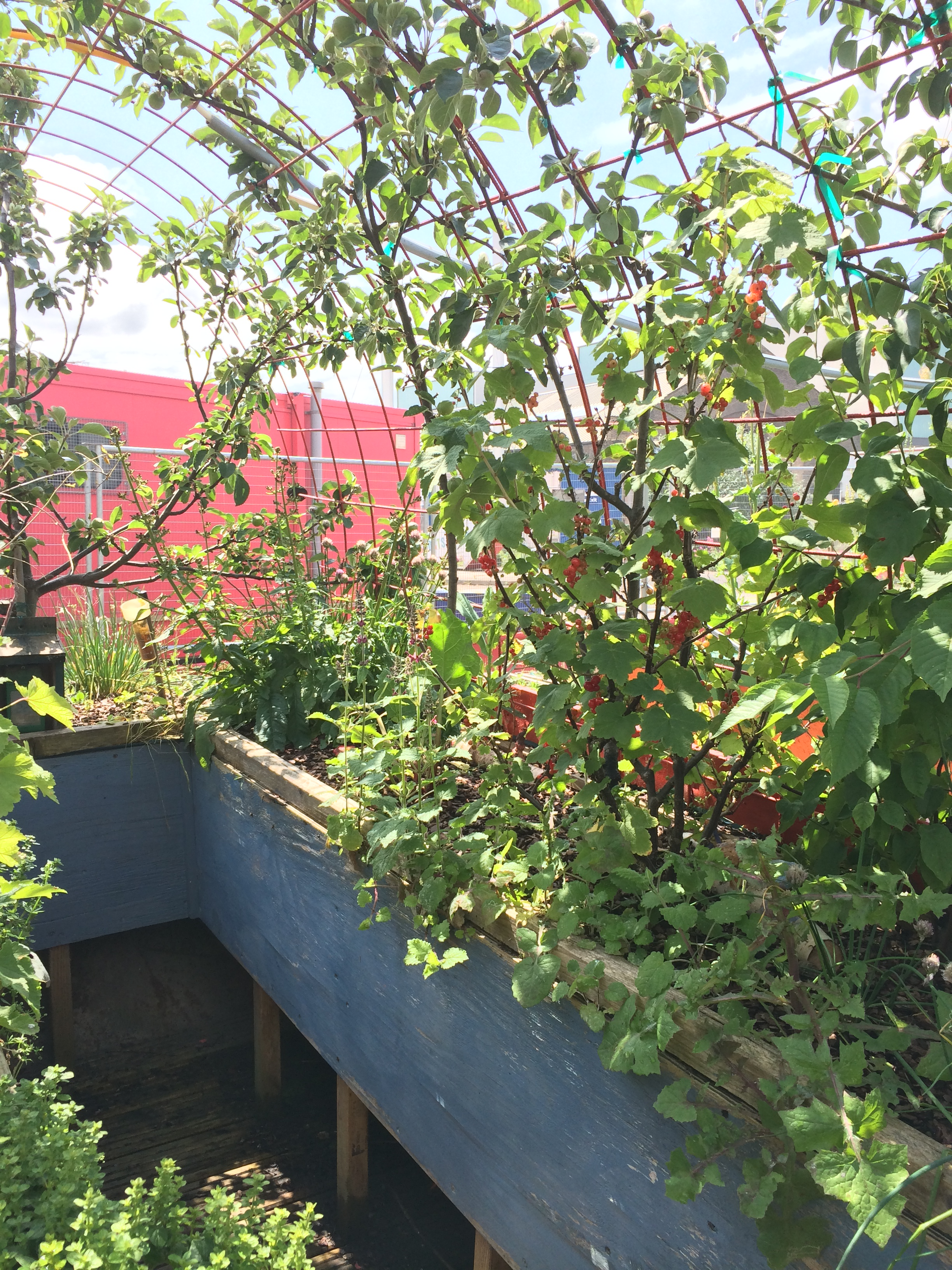 The skip garden kings cross london honestly foodie for Garden trees london