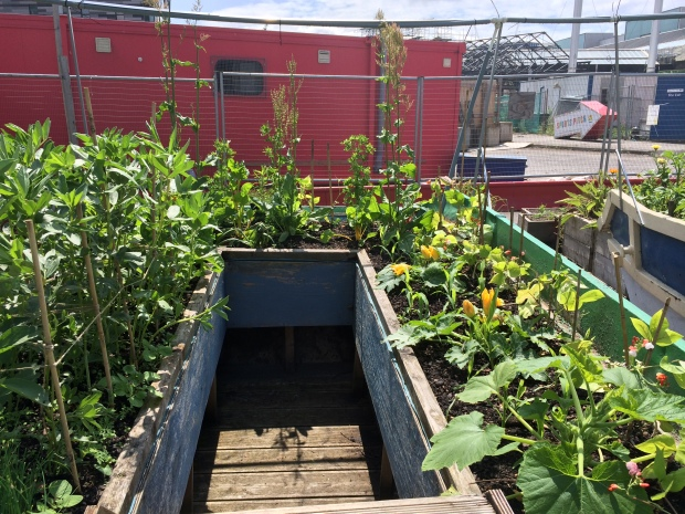 Veggies growing in the skips
